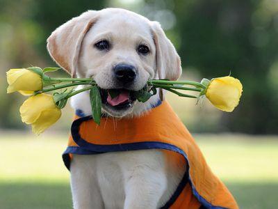 Best dog breeds: types and description of