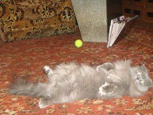 Стадии родов у кошки