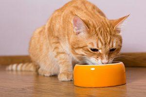 Аппетит у кошки
