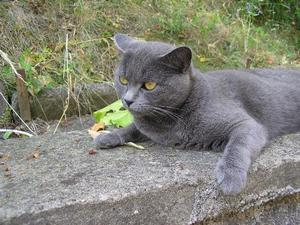 Повадки картезианской кошки