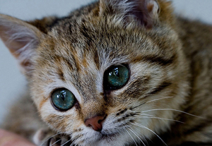 Какие должны быть глаза у кошки
