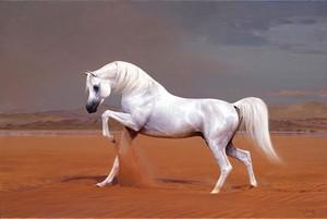 Белый арабский конь