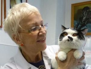 Короновирусная инфекция - опасная болезнь у кошек