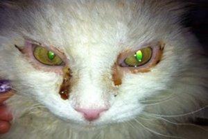Как проявляются болезни глаз