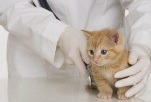Консультация с ветеринаром