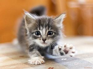 Котенок в доме