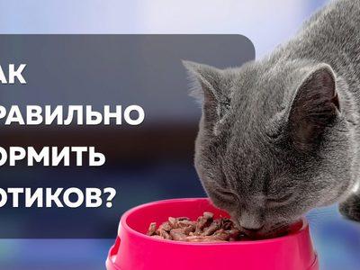 Корм для кастрированных котов: как правильно кормить питомца