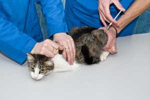Дозировка Гемобаланса зависит от веса и состояния животного