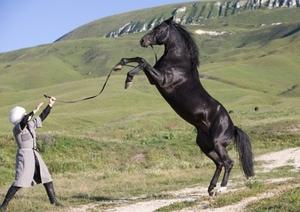 Карачаевская лошадь: характер