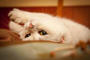Средства для кошки при течке
