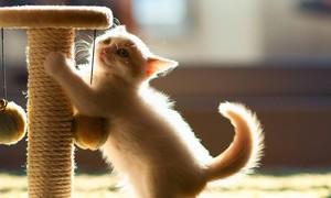Маленький котенок точит коготки