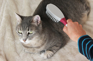 Расчесывание кошки