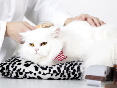 How to care for a domestic cat