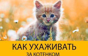 Уход за маленьким котенком