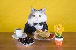 Какой корм для кошек лучше
