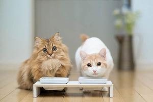 Какой корм лучше для котов