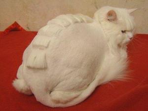 Рекомендации по стрижке котов