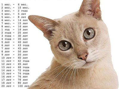 How to determine the age of the cat or cats