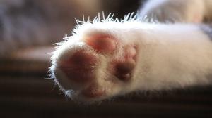 Как приучить котенка не драть обои