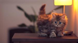 Почему котенок портит мебель