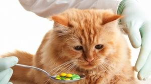 Как давать таблетку домашнему любимцу