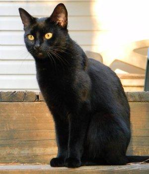 Кличка для черного кота