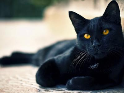 How to name a black kitten boy