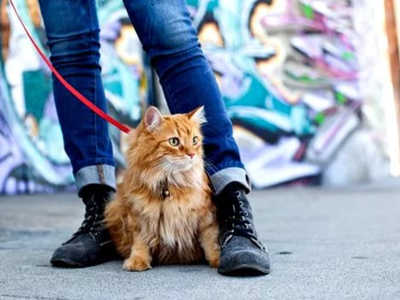 How to put a harness on a cat and how to choose pet leashes