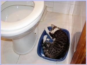 Лоток для кота