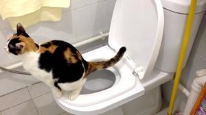 Унитаз для кота