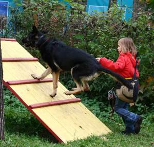 Ребёнок дрессирует собаку