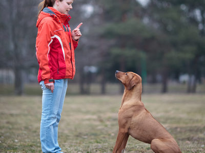 How to train a dog at home