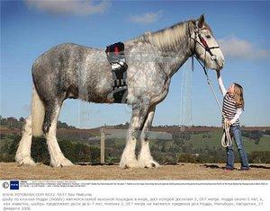 Породы самых больших лошадей