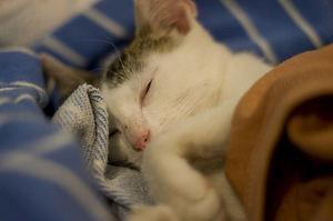 Признаки лецкоза у кошек