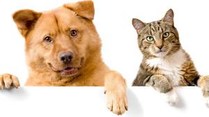 Лигофол для кошек и собак применение
