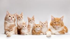 Мастит у кошки: симптомы и лечение, причины возникновения