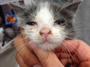 Заболеване кошек