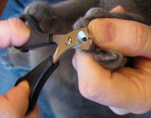Как правильно стричь когти котенку
