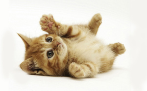 Как воспитать умного кота