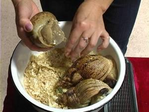 Чем питаются улитки ахатины