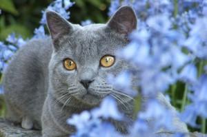 Чем могут болеть кошки