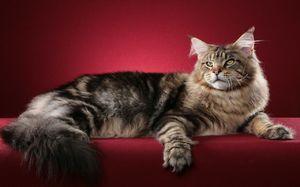 Умнейшие кошачьи породы