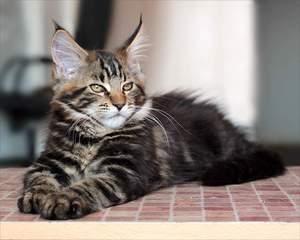 Коту один год