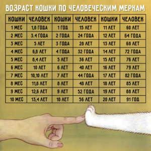 Таблица сравнения возраста котов и людей