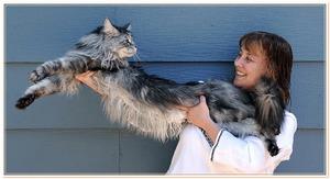 Большущий домашний кот
