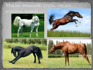 Масти лошадей: описание, фотографии и названия