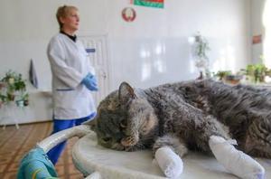 Как удаляют когти у кошек