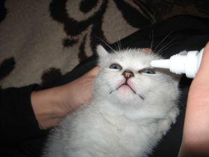 Сильно слезятся у котенка глаза - чем закапать