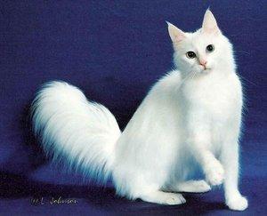 Красивые кошки
