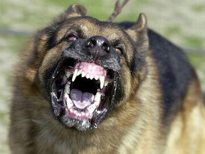 The most dangerous dog breeds in the world for a person